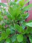 Herbs for #willowswitchsgarden