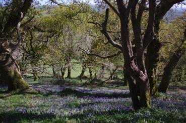 woods-5069321_1920