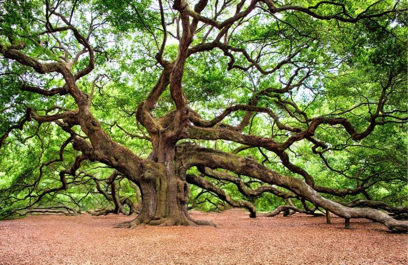 oak-tree-2018822_1920